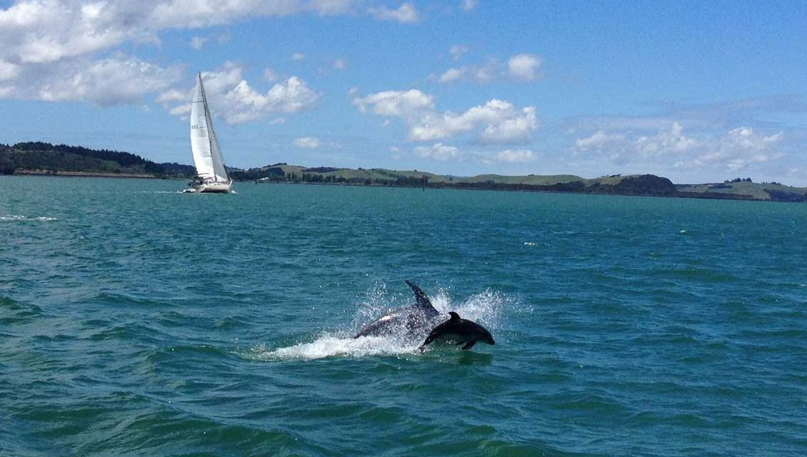 You may even spot a dolphin on the way over to Russell